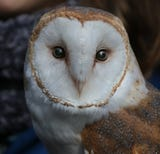 Wild Wings, a nonprofit bird rescue group based at Mendon Ponds Park, is hosting its second birds and brews event on Jan. 6 at Three Heads Brewing.