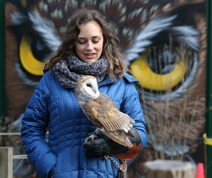 Volunteer Heather Natola takes Melinda, a barn owl, out for a walk around the holding enclosures at Wild Wings Inc., located in Mendon Ponds Park in Honeoye Falls Tuesday, Dec. 18.