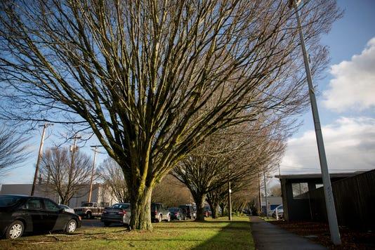 INSIDE MAIN-Tree Removal Mr02
