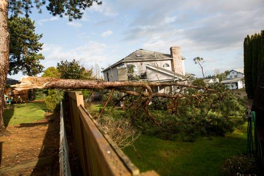 Fallen Tree Mr02