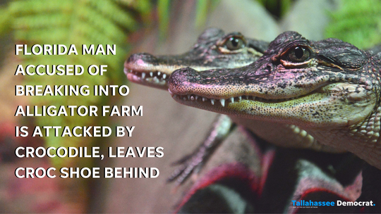 Florida man accused of breaking into alligator farm is attacked by crocodile, leaves Croc shoe behind. Graphic, USA TODAY NETWORK