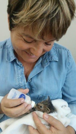 Volunteer Paola Kiriakow bottle feeds a CFF kitten.