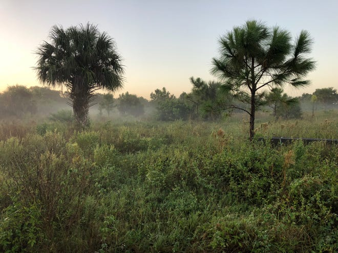 The temporarily closure of Pinelands Preserve has been extended through January due to ongoing issues surrounding the entrance road leading into the preserve. St. Lucie County's Environmental Resources Department hopes to have the preserve reopen by Feb. 1.