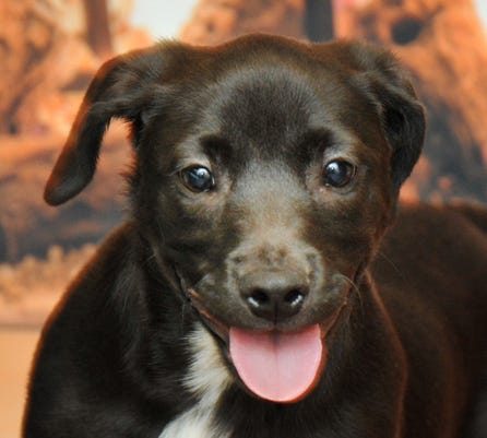 Pets Of The Week 12 25 18