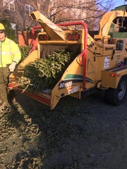 Christmas trees going into the chipper in Georgia, as part of the Bring One For the Chipper campaign.