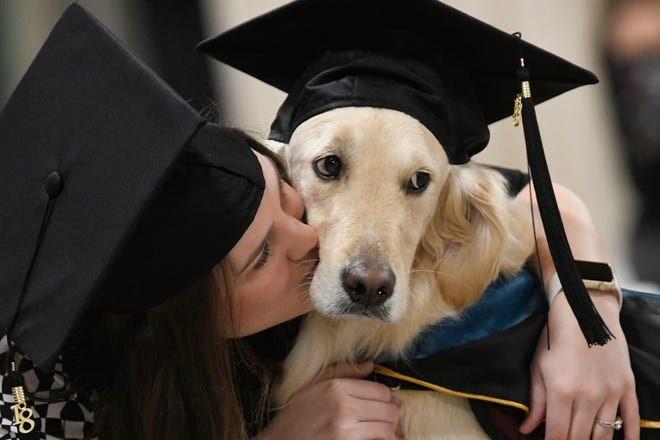 """Griffin"" Hawley, the Golden Retriever service dog, is given a congratulations hug by his owner Brittany Hawley after being presented an honorary diploma by Clarkson, during the Clarkson University ""December Recognition Ceremony"" in Potsdam, N.Y., Saturday Dec. 15, 2018. Griffin's owner, Brittany Hawley, also received a graduate degree in Occupational Therapy. Both attended 100% of their classes together."