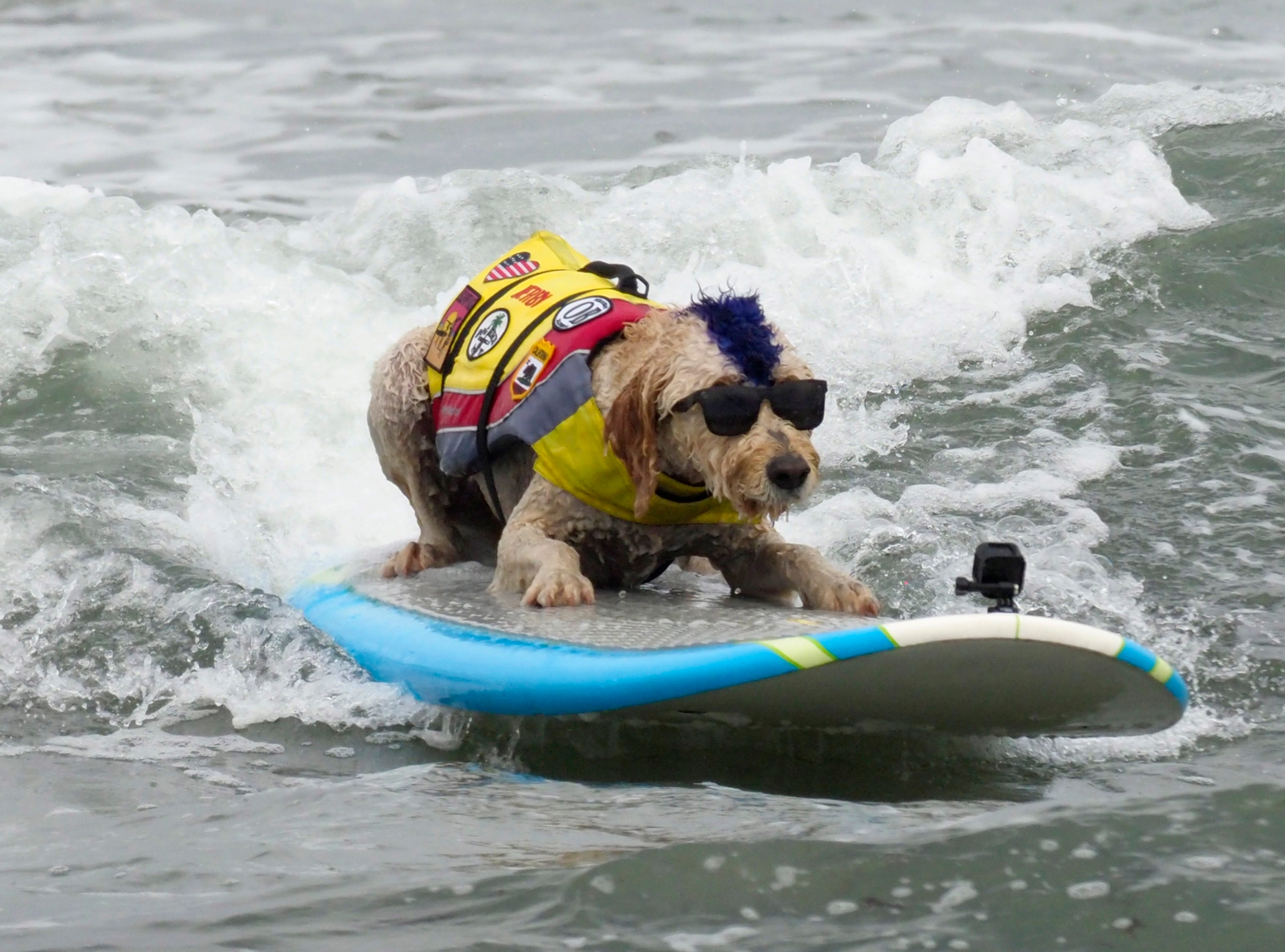 Aug. 4, 2018: Derby the dog surfs during the World Dog Surfing Championships at Linda Mar Beach in Pacifica, Calif.