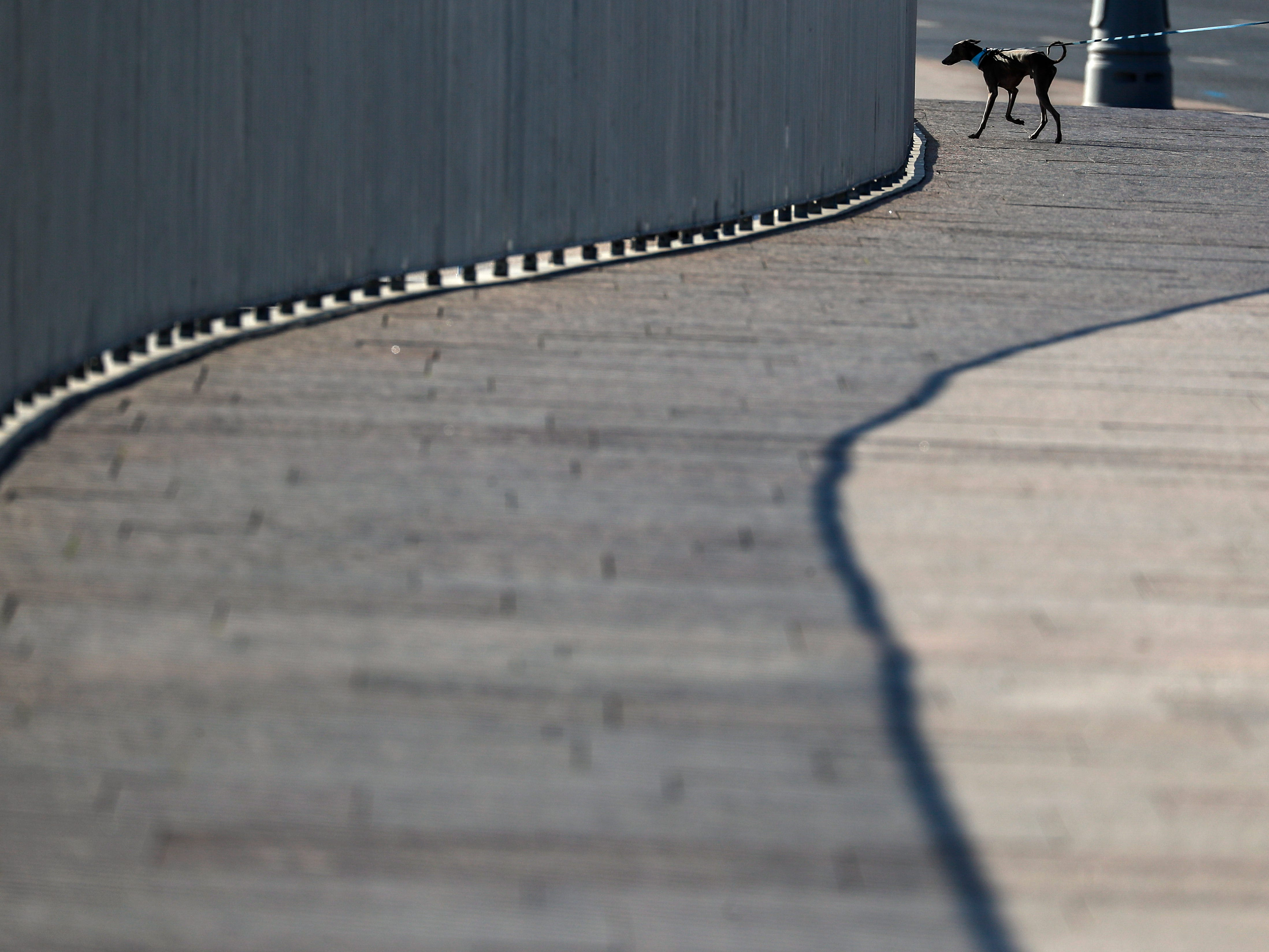 A woman walks with her dog in downtown of Moscow, Russia, Sept. 21, 2018.