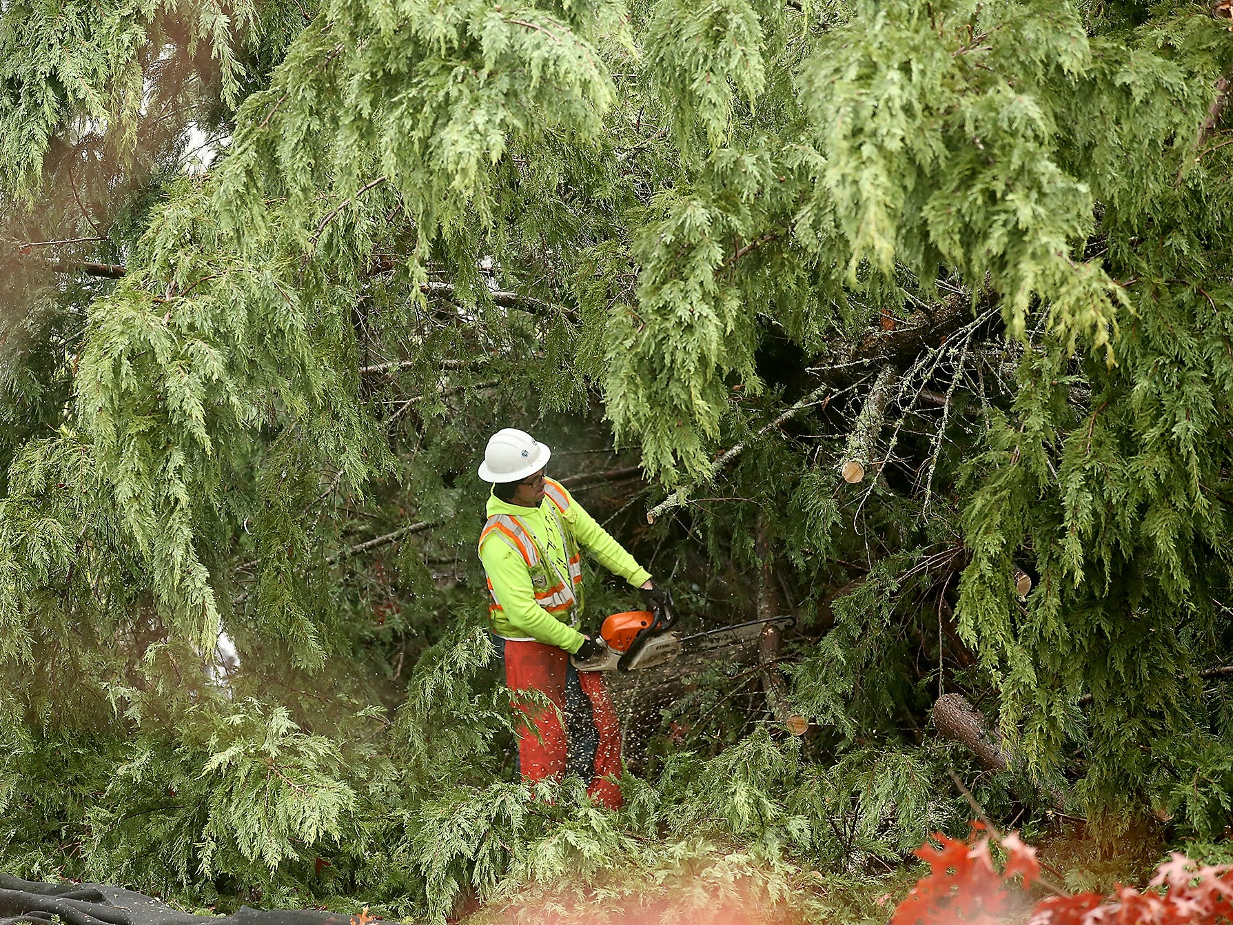 A county worker cuts a large tree at the corner of Harris and Tiburon in Port Orchard on Wednesday, December 19, 2018.