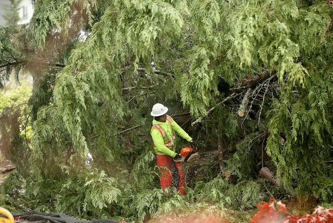 A county worker clears away a tree near the corner of Harris and Tiburon in Port Orchard on Wednesday.
