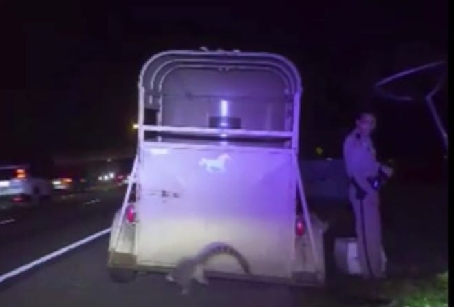 A lemur hopped out of a horse trailer on Interstate 4 earlier this month. The driver, a Brevard County resident, was charged with DUI.
