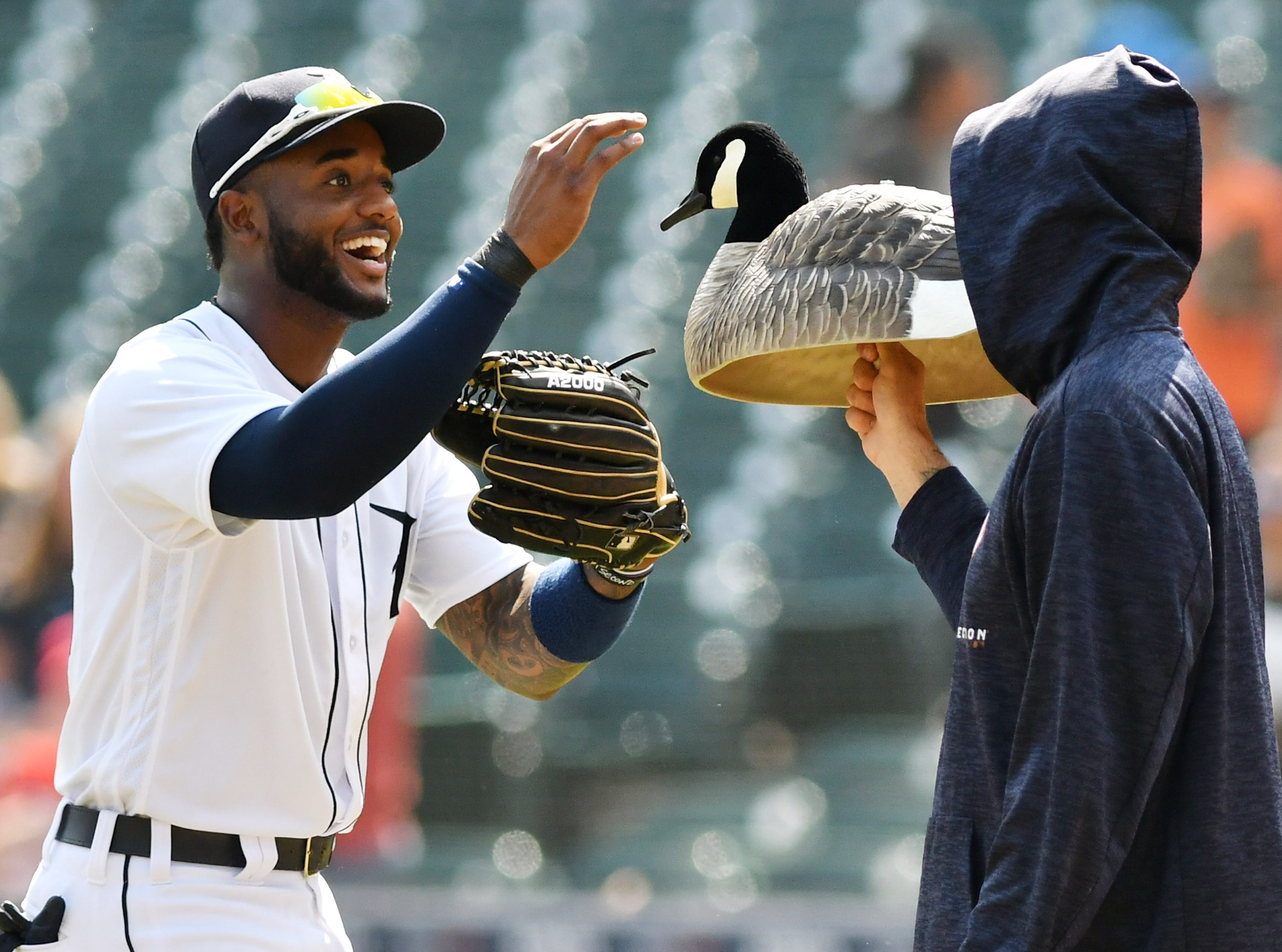 Tigers' Niko Goodrum greets the goose decoy held by Mike Fiers after the Tigers beat the Los Angeles Angels 6-2 on May 31, 2018. The Tigers won four games in a row using the goose as a good luck charm after a live one few into the stands during a game the night before. The good luck didn't last, however, as the Tigers finished the 2018 season with a 64-98 record, 27 games out of first place in the AL Central.