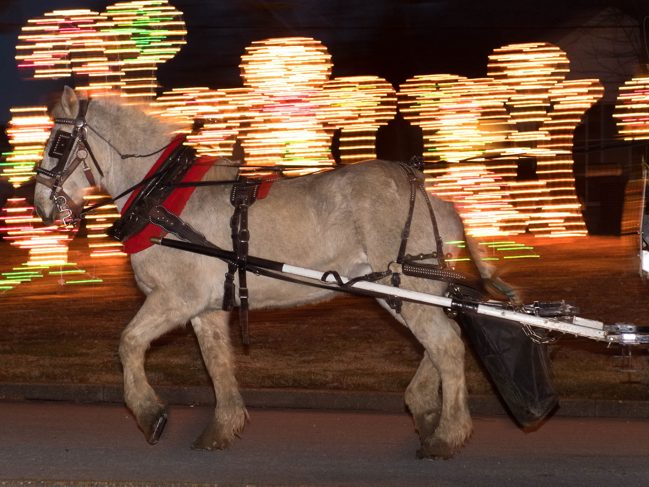 Shelia O'Risky, with the Horseshoe Bend Carriage Company, drives Queenie, with a load of visitors, through the Ritzy's Fantasy of Lights in Garvin Park Tuesday, December 18, 2018.