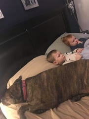 Kenna, a pit bull mix, lies next to Andrew and Mara Welnetz's 2-year-old twins, Noble and Quinn.