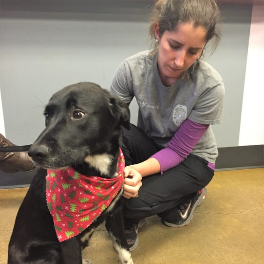 Ruger, a lab mix found as a stray, is the 1000th animal adopted from the Lafayette Animal Shelter. He's shown here with Shelter Supervisor Shelley Delahoussaye.