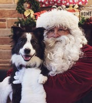 A six-year-old Australian Shepherd named Oliver showed the bumbling bandit who was boss of a home in Tosa