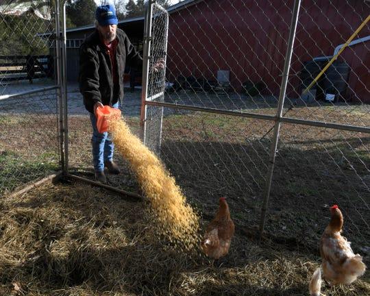 Olin Funderburk feed chickens at Stoney Creek Farm.