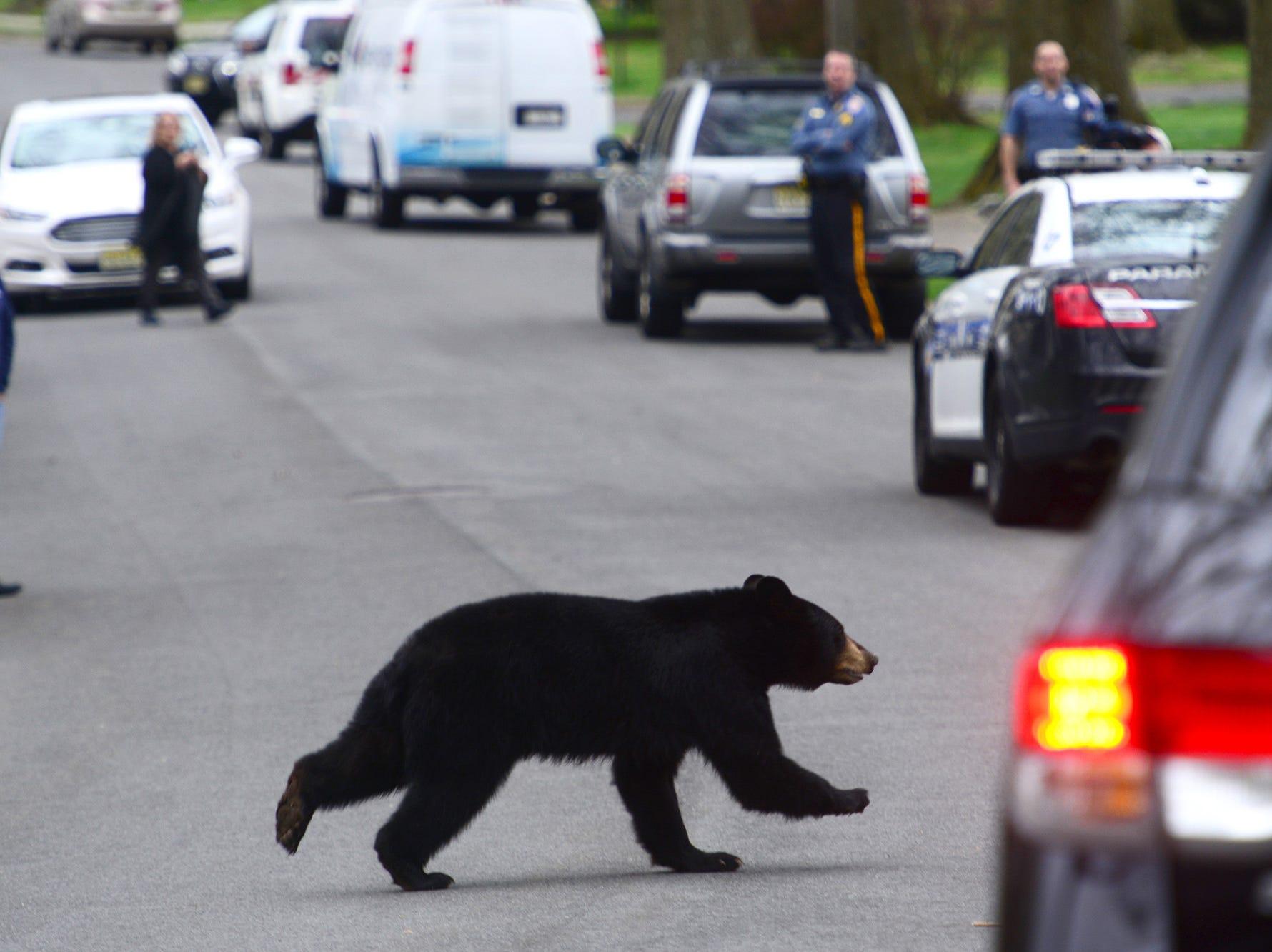 A black bear runs across Benton Road in Paramus on Monday April 30, 2018.