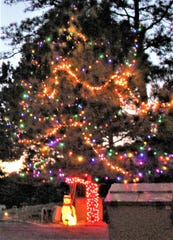 Quite a job of hanging lights on this tall tree.