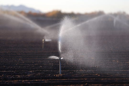 Sprinklers water a newly planted field of romaine lettuce in southwestern Arizona.