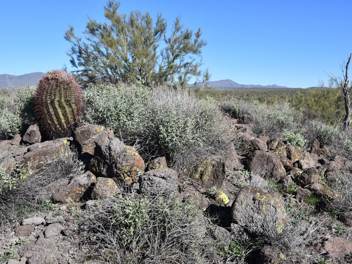 Chunks of lichen-encrusted basalt litter the Basalt Ridge Trail in Scottsdale's McDowell Sonoran Preserve.
