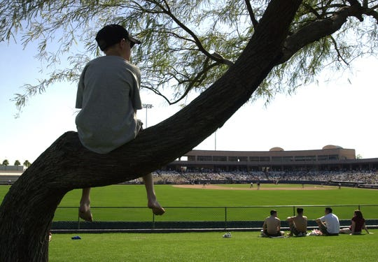 You know what you won't find during baseball's regular season? The perfect mesquite tree for taking in a game. And this premium seat didn't cost a penny more at Tempe Diablo Stadium in 2001.