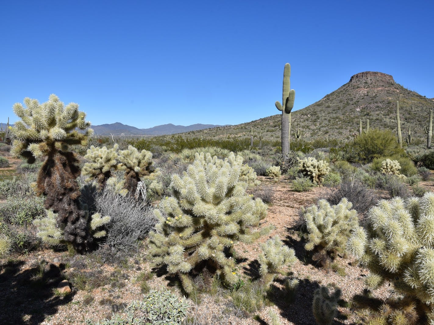 The Upper Ranch Trail traverses the saddle of Browns Mountain in McDowell Sonoran Preserven.