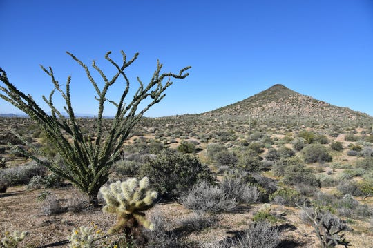 Distinctive Cone Mountain flanks the trails of the McDowell Sonoran Preserve.