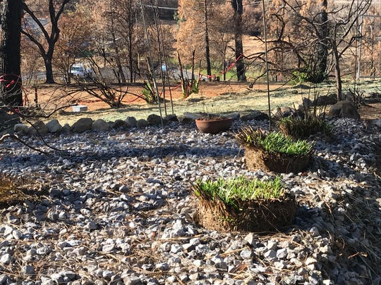 A rock garden is seen December 2018 in Shasta, about five months after the Carr Fire burned through the area.