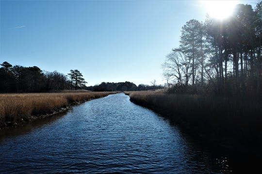 Over 98,000 of Delaware's wetlands — that's 44 percent — are in Sussex County. Recent council ordinances proposing more restrictions on buffers and calculating density could further protect wetlands, which add a thick layer of protection from flooding caused by storms.