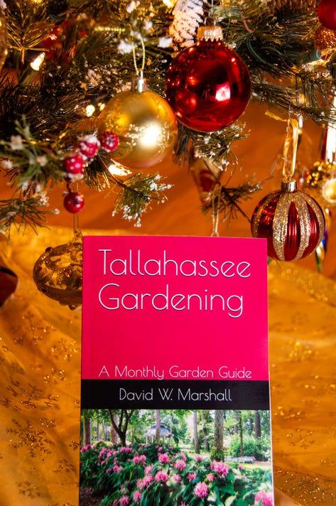 Tallahassee Gardening Christmas Tree Resize