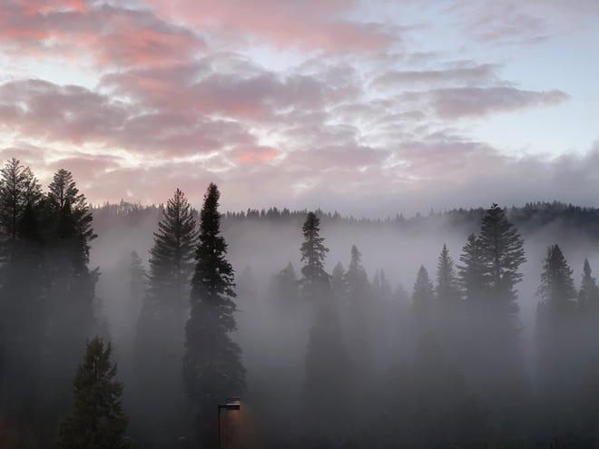 Fog surrounds trees at Yosemite National Park.