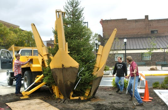Planting A Holiday Tree