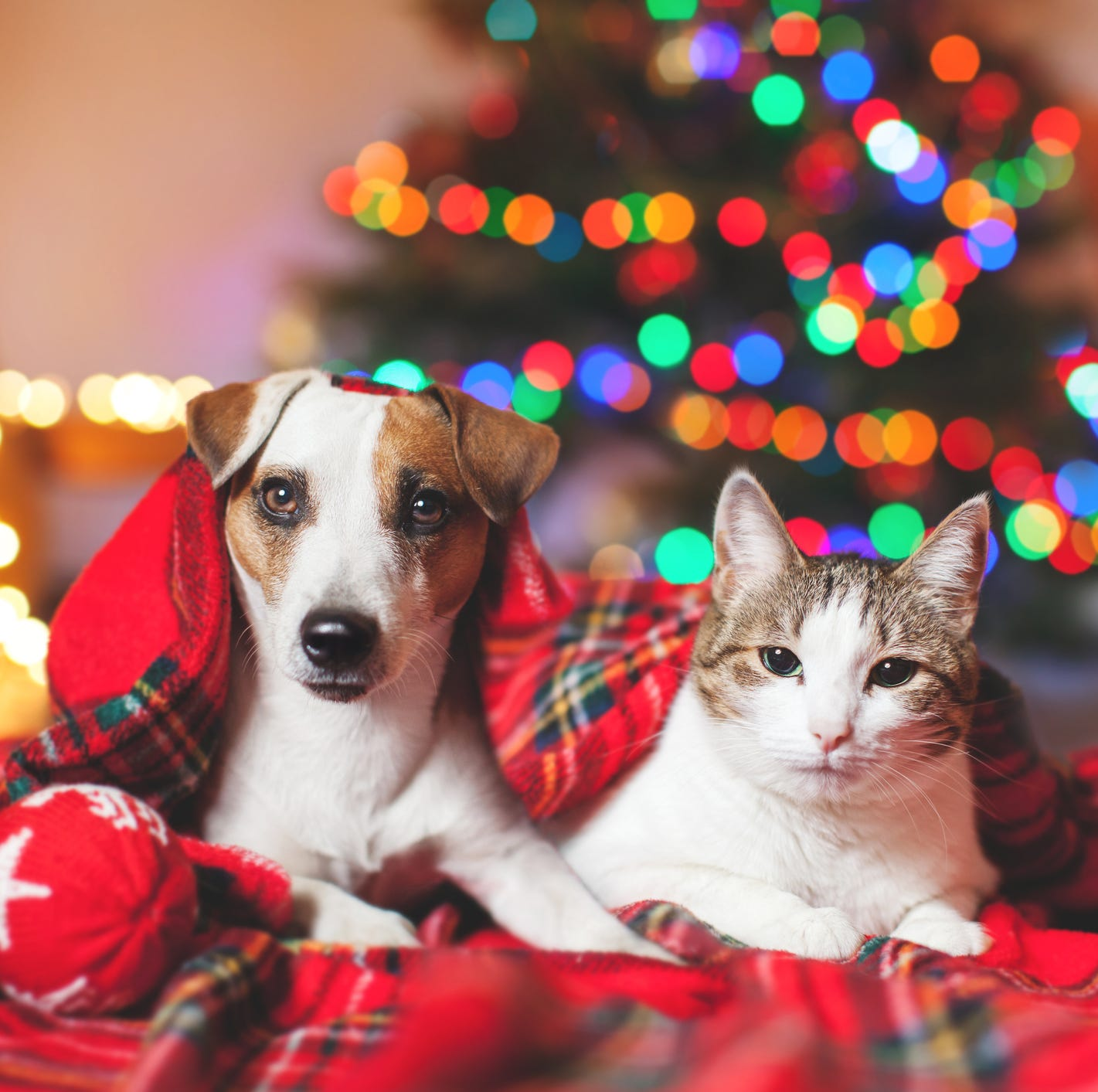 Traveling with pets this holiday season? Here are several tips for a smooth journey