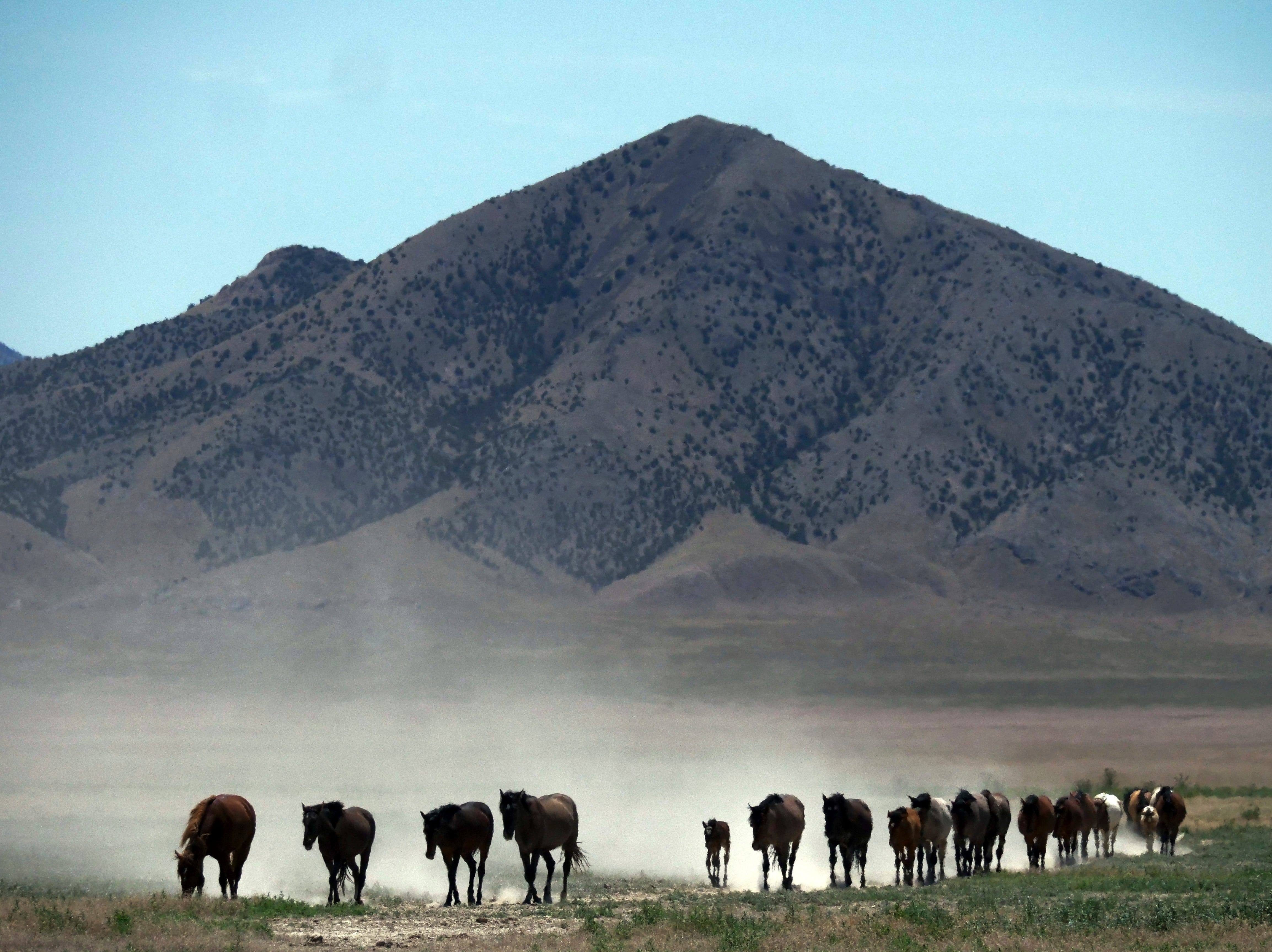 June 29, 2018: Wild horses walk to a watering hole outside Salt Lake City, Utah. Harsh drought conditions in parts of the American West are pushing wild horses to the brink and forcing extreme measures to protect them. Federal land managers have begun emergency roundups in the deserts of western Utah and central Nevada.