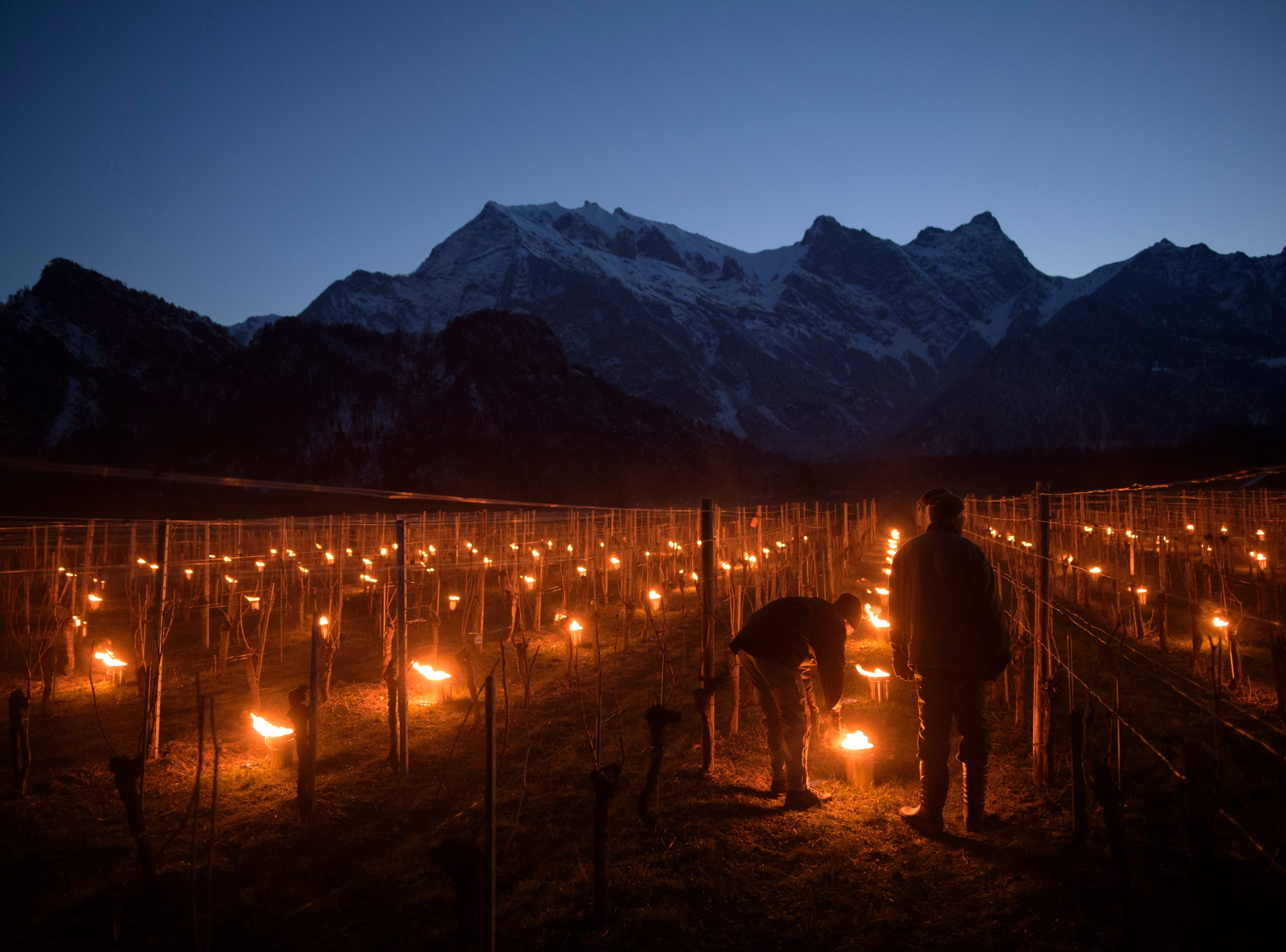 March 22, 2018: Frost candles are lit in a vineyard in Flaesch, Graubuenden, Switzerland. After the frost nights of 2016 and 2017 caused damage to crops, the local agricultural school is conducting trials to determine the value of measures like frost-candles.