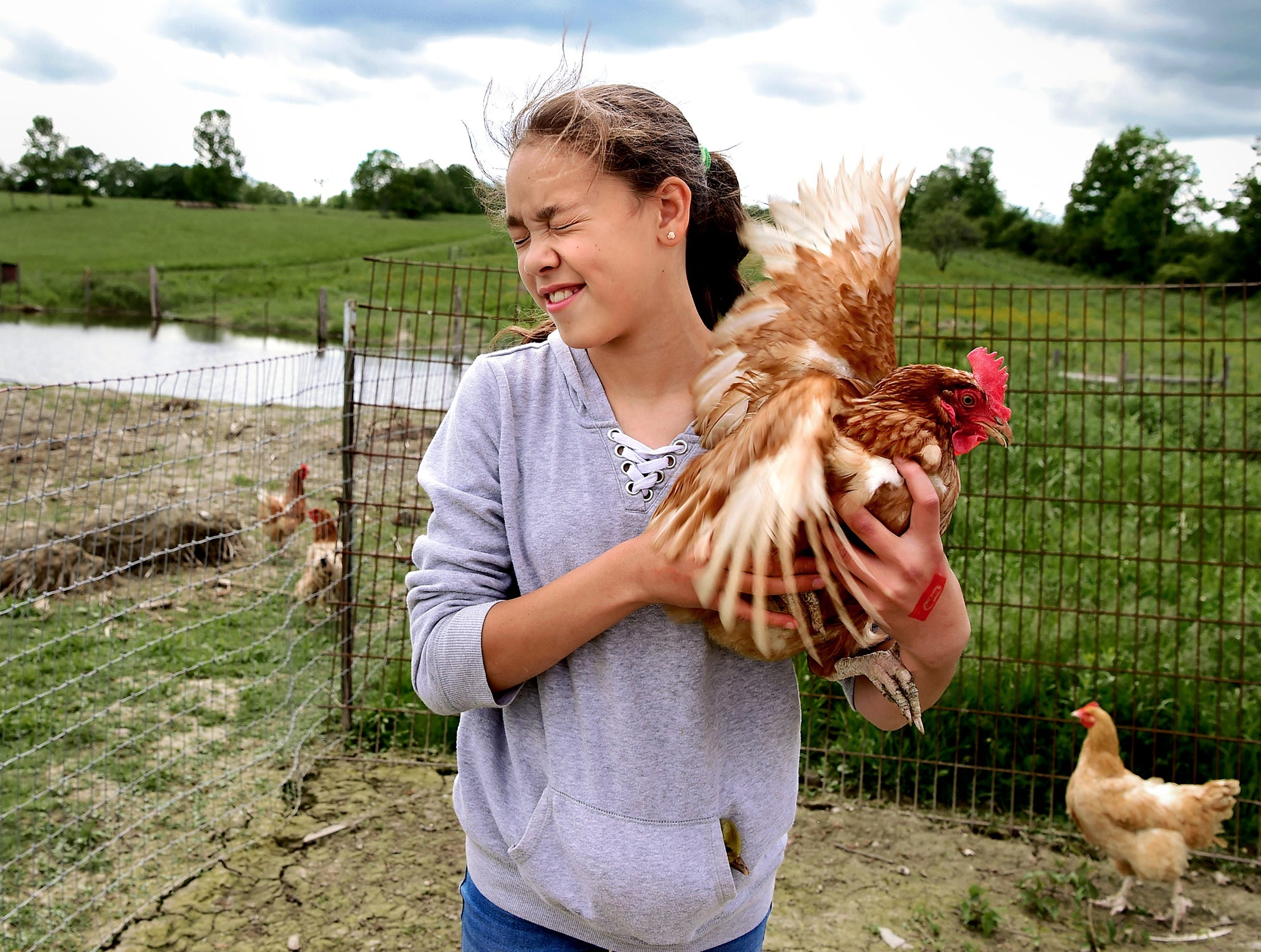 Peyton White hold a chicken on her family's farm in Trumansburg on June 4, 2018. Peyton, age 11, was afraid of the chickens when she first went to live with her grandparents but now cares for the chickens and many other farm animals. Peyton says she wants to be a veterinarian when she grows up.