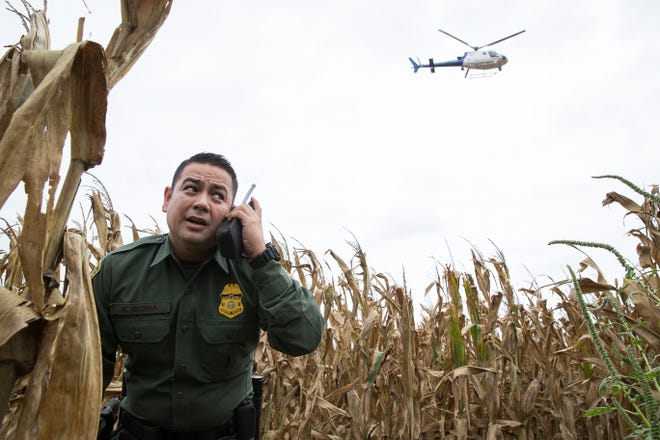 This Caller-Times photo by Courtney Sacco showing Border Patrol Agent Marcelino Medina in a cornfield on June 19, 2018 in Mission, Texas, won first place for News Photography in the 3A division of the Texas Associated Press Managing Editors contest.