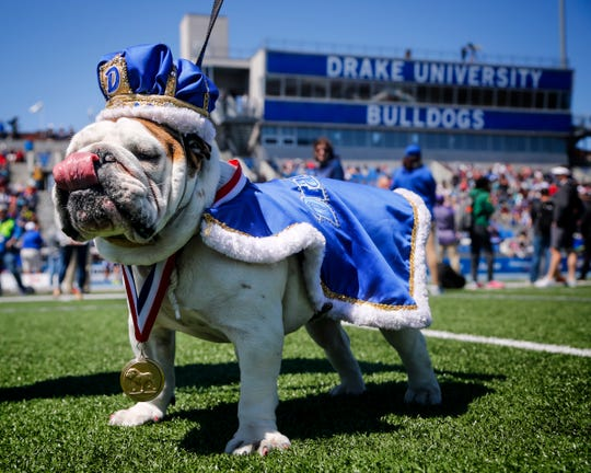 Beautiful Bulldog contest winner Bow-Z takes to the field at the Drake Relays Saturday, April 28, 2018.