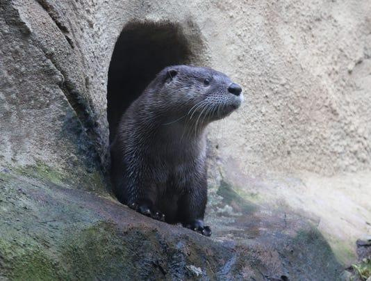 Otter Kalee 1 Jennie Miller