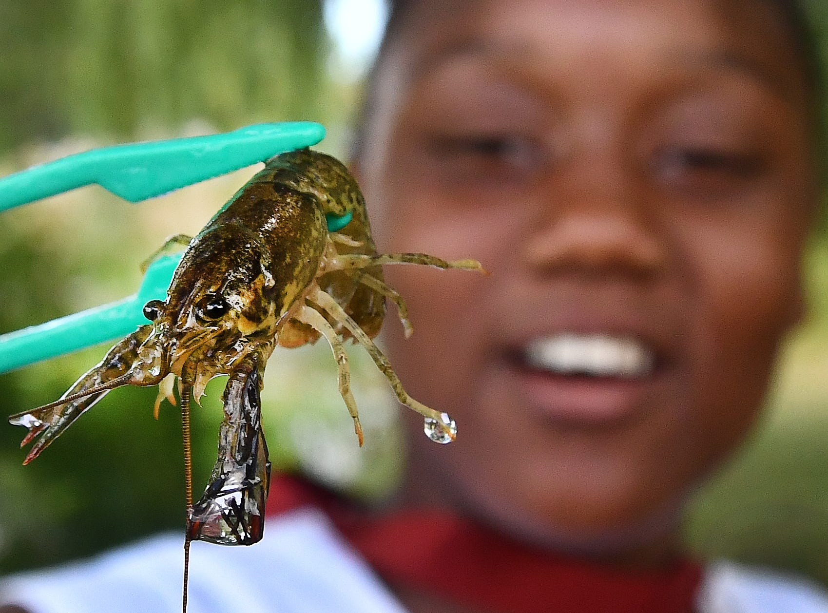 Dallas Forest, 11, proudly holds up a crayfish she netted from Lake Muskoday on Belle Isle before releasing it. Detroit Latin School's Socrates in the Summer program included a field trip to the Belle Isle Nature Center on July 17, 2018.