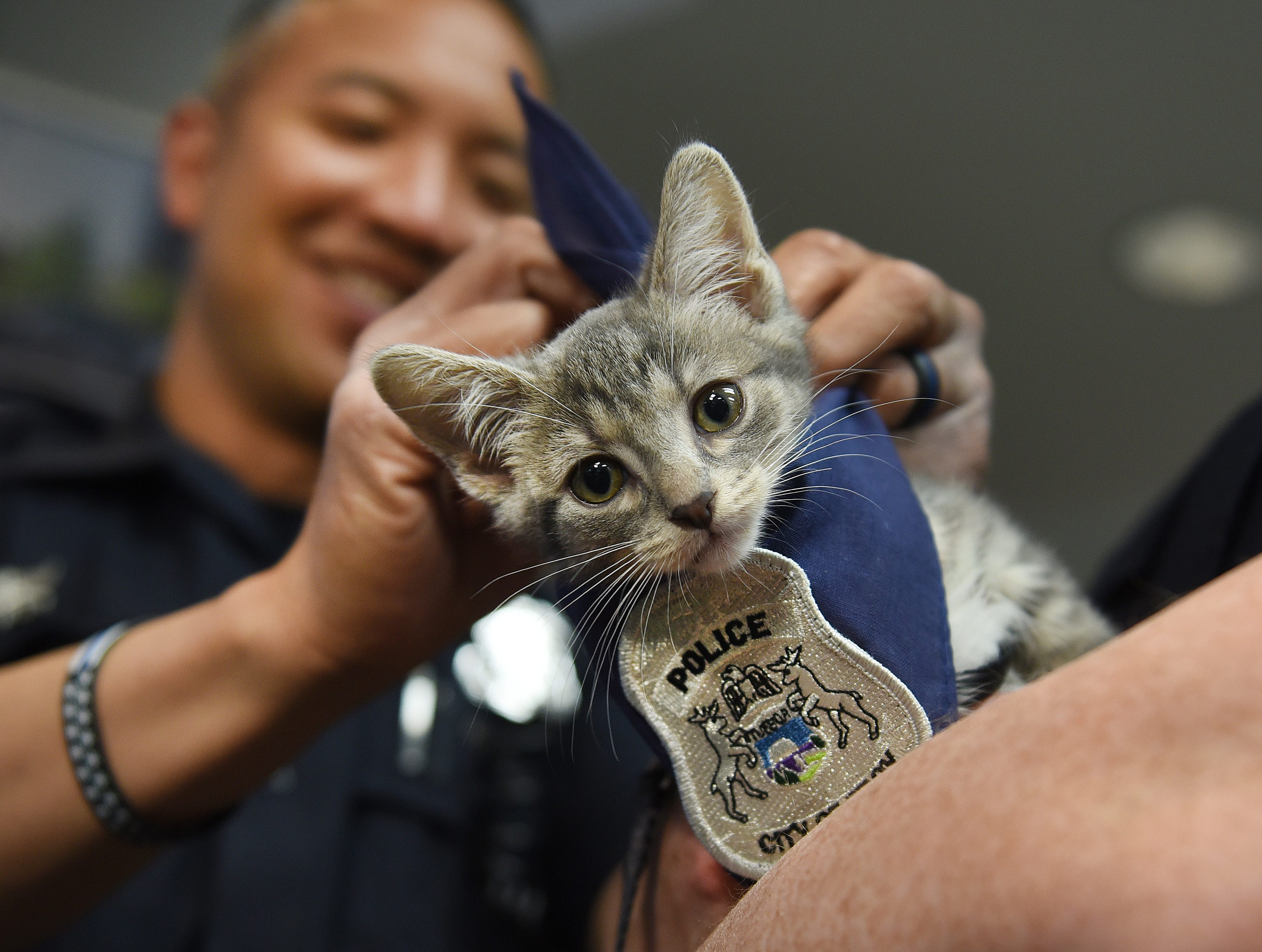 Troy Police officer John Julian places a badge on Pawfficer Donut, the newly official Troy Police cat, during a welcoming ceremony at police headquarters on Friday, May 11, 2018.