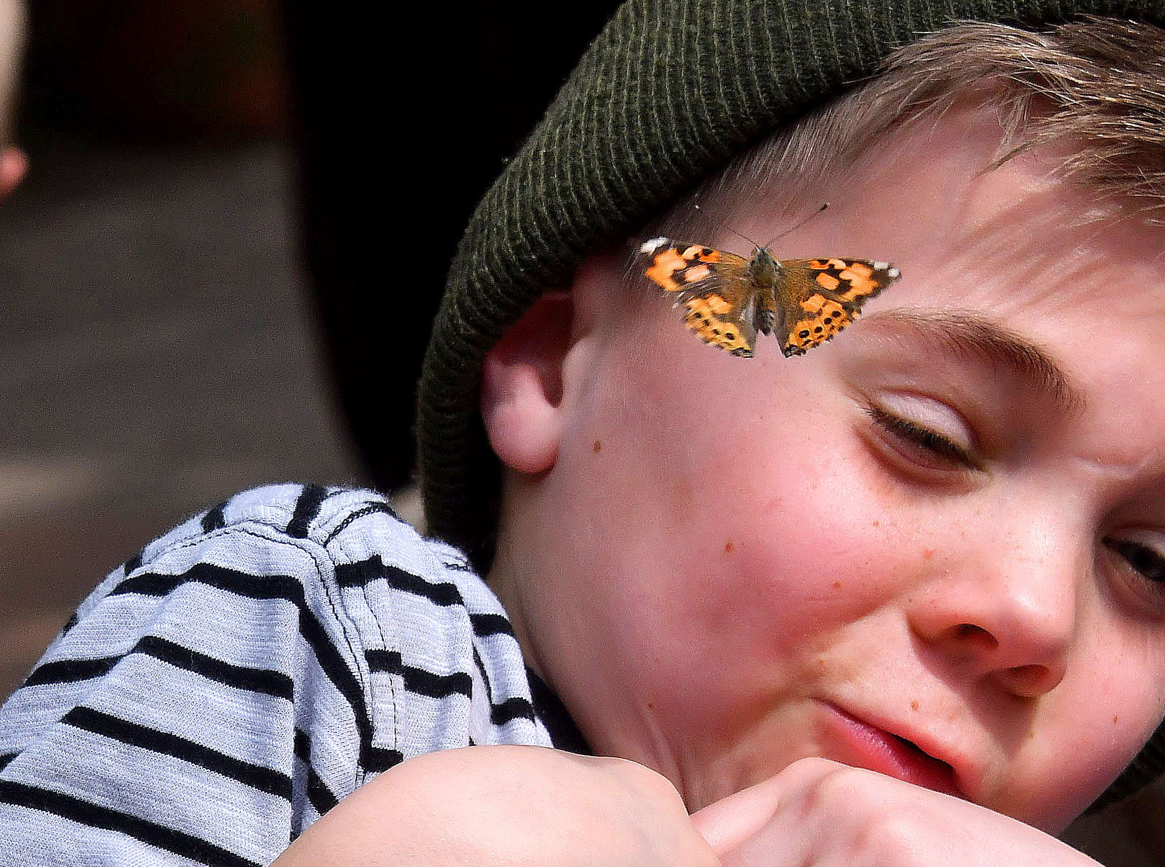 Jackson Howell flinches when approached by a butterfly as first graders from Schwarz Creek elementary schools visit the indoor 4H Horticulture Butterfly House on campus at MSU on April 9, 2018.