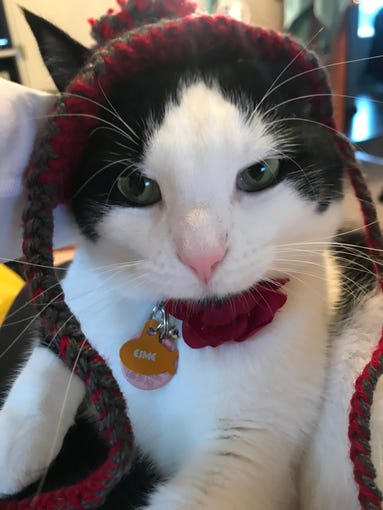 "Jennie Gresham knits ""Cat Hats"" for friends, family and by request, asking only that recipients donate to the Maclean Animal Adoption Center in return.  Owners take photos and send their cats' ""comment"" on the hat.  Esme the cat doesn't have much to say."