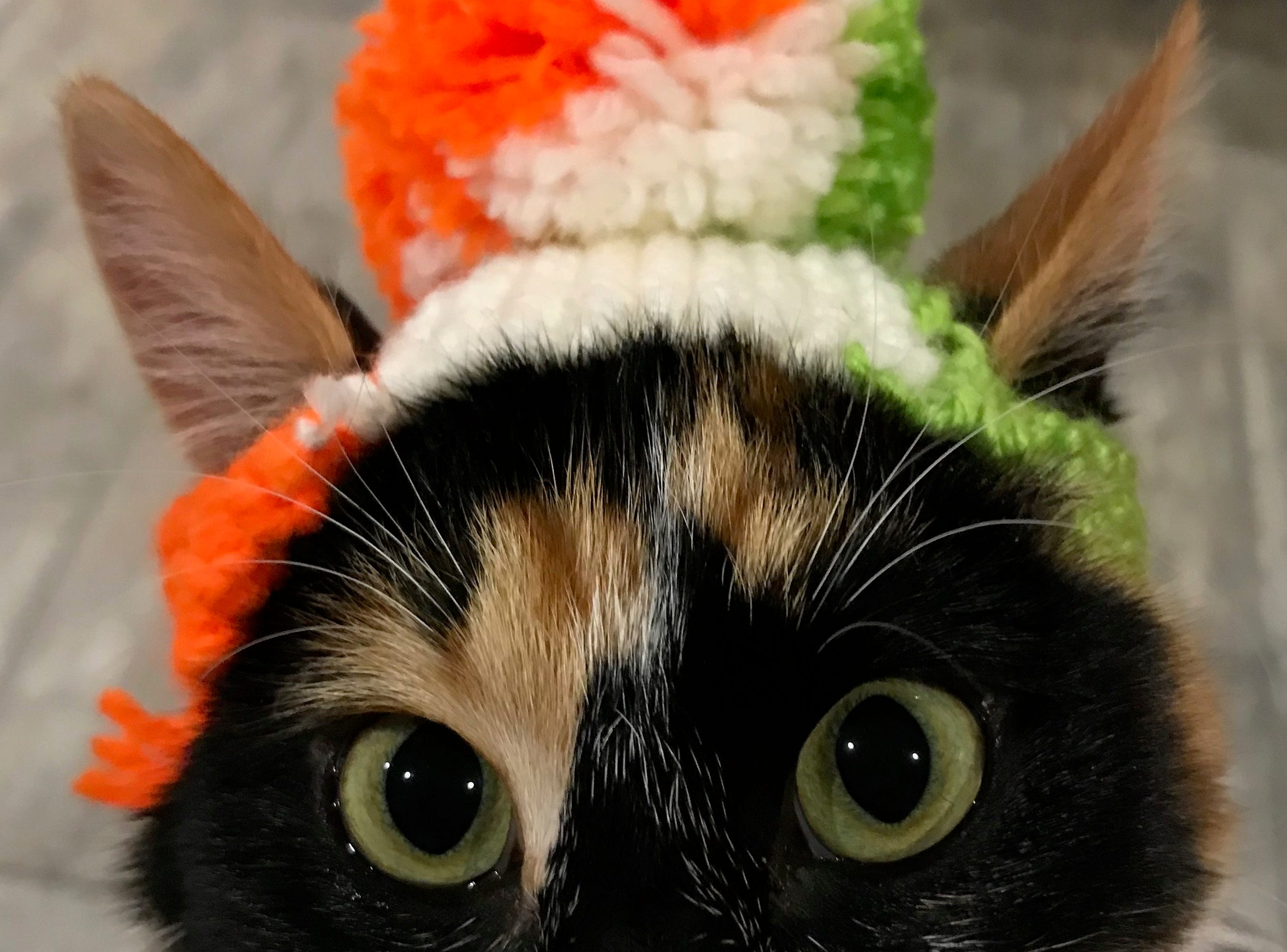"""Jennie Gresham knits """"Cat Hats"""" for friends, family and by request, asking only that recipients donate to the Maclean Animal Adoption Center in return.  Owners take photos and send their cats' """"comment"""" on the hat.  Guinness says """"I'm having e-collar flashbacks..."""""""