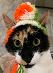 "Jennie Gresham knits ""Cat Hats"" for friends, family and by request, asking only that recipients donate to the Maclean Animal Adoption Center in return.  Owners take photos and send their cats' ""comment"" on the hat.  Guinness says ""I'm having e-collar flashbacks..."""
