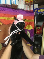 """Jennie Gresham knits """"Cat Hats"""" for friends, family and by request, asking only that recipients donate to the Maclean Animal Adoption Center in return.  Owners take photos and send their cats' """"comment"""" on the hat.  Jennie's cat, Tina Marie, doesn't have much to say."""