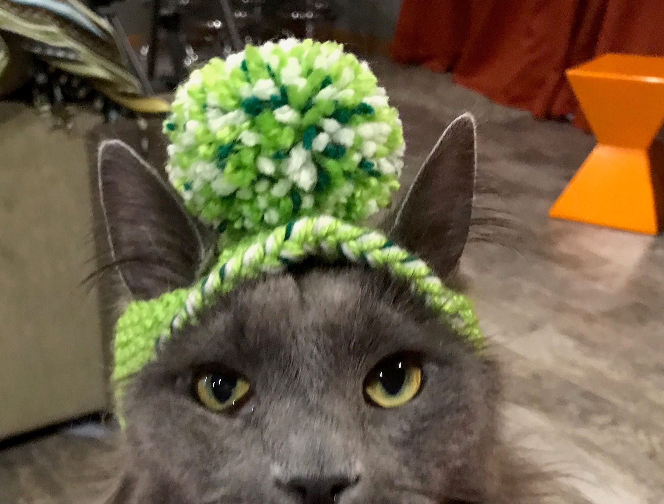 """Jennie Gresham knits """"Cat Hats"""" for friends, family and by request, asking only that recipients donate to the Maclean Animal Adoption Center in return.  Owners take photos and send their cats' """"comment"""" on the hat.  Grizwold doesn't have much to say."""