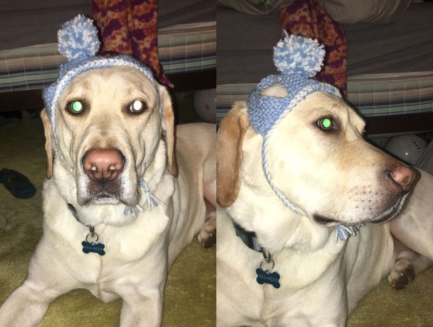 """Jennie Gresham knits """"Cat Hats"""" for friends, family and by request, asking only that recipients donate to the Maclean Animal Adoption Center in return.  Owners take photos and send their cats' """"comment"""" on the hat.  Jake the dog borrows his brother's hat for a quick photo."""