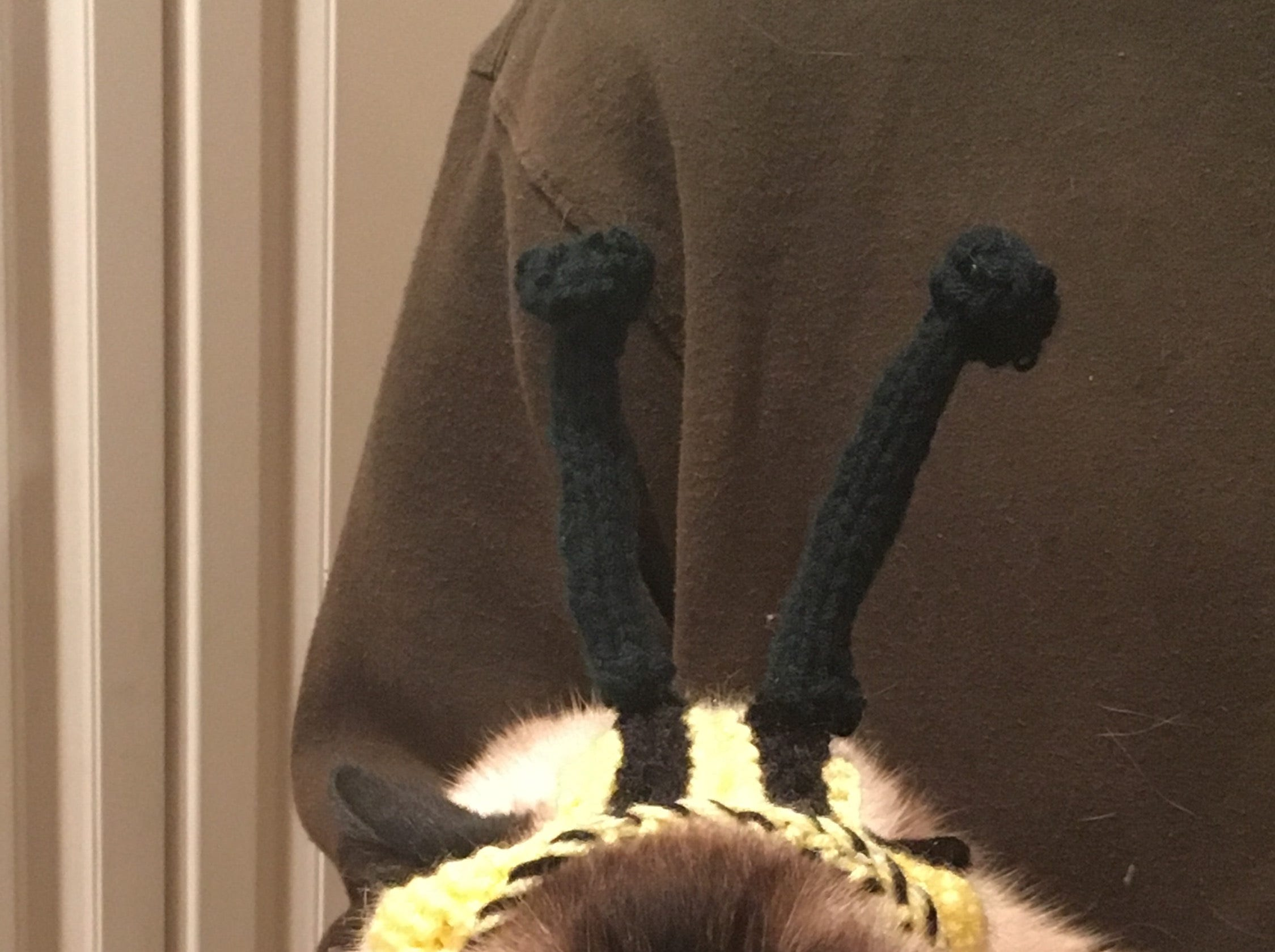 """Jennie Gresham knits """"Cat Hats"""" for friends, family and by request, asking only that recipients donate to the Maclean Animal Adoption Center in return.  Owners take photos and send their cats' """"comment"""" on the hat.  Mocha says """"Look at me. Do I really need to comment?!?!"""""""